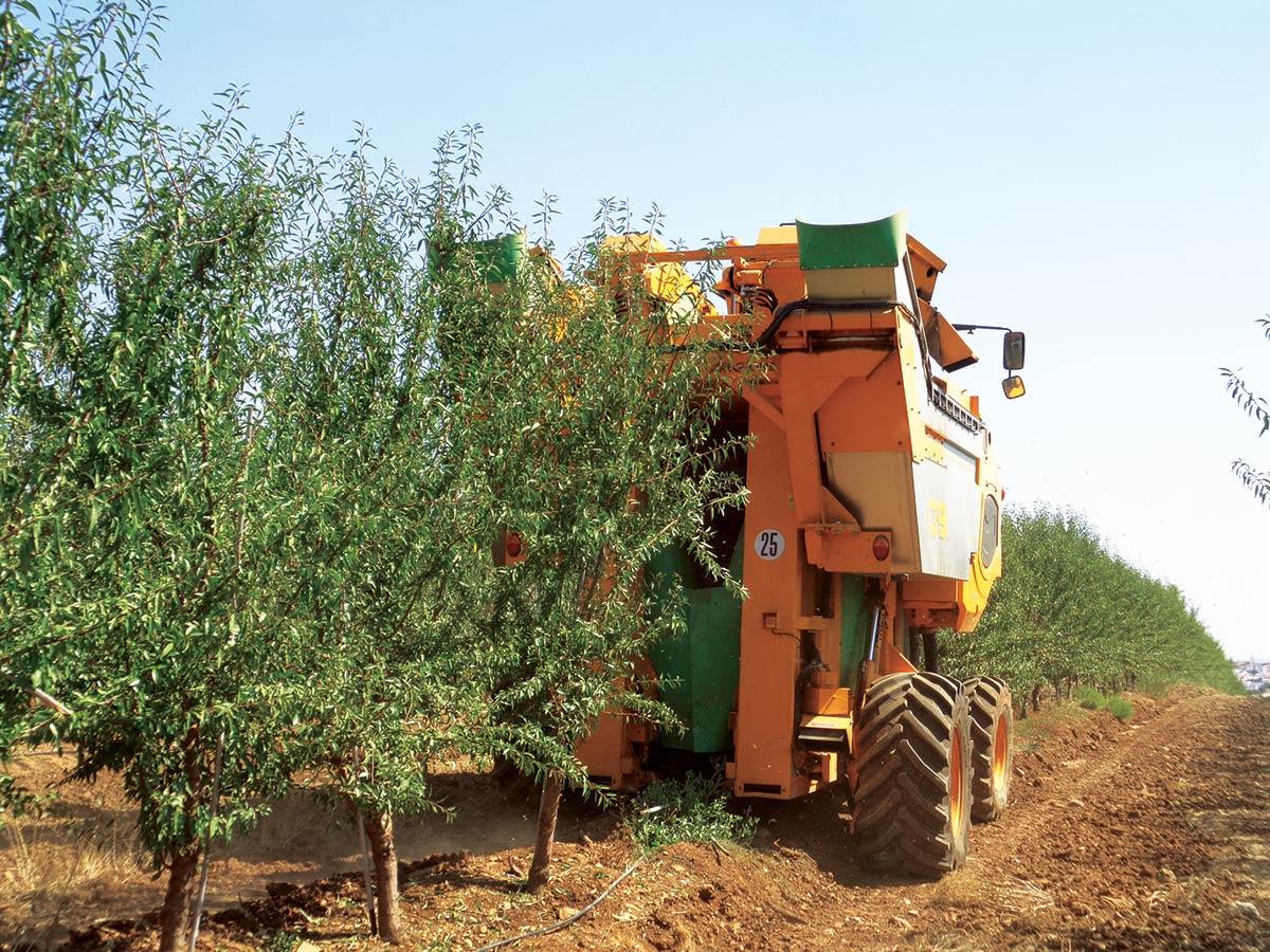 Ensaio de sistemas de condução em amendoeira e adaptação à colheita mecânica a decorrer  no âmbito de um protocolo experimental