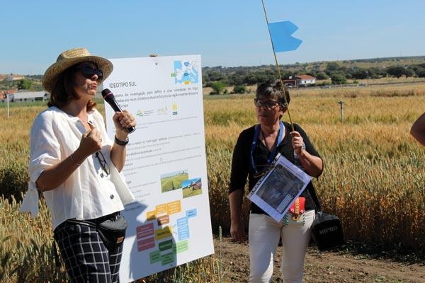 Dia do Agricultor - Visita ao Projecto Lista de Variedades Recomendadas de Trigos de Qualidade