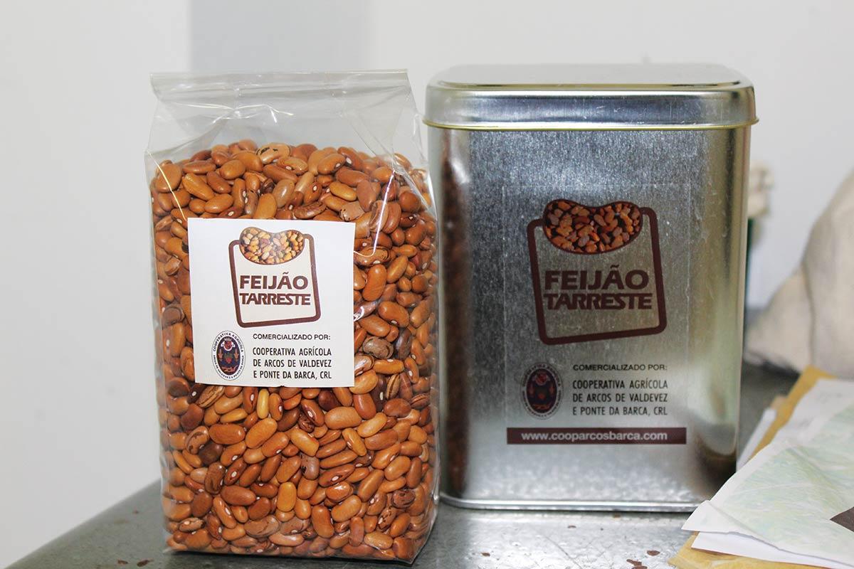 Feijão Tarrestre recuperado para produção comercial a partir de variedade conservada no Banco Português de Germoplasma Vegetal em Braga
