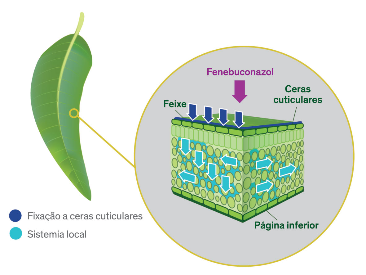 INDAR 5 EW - Fungicida sistémico e de forte fixação