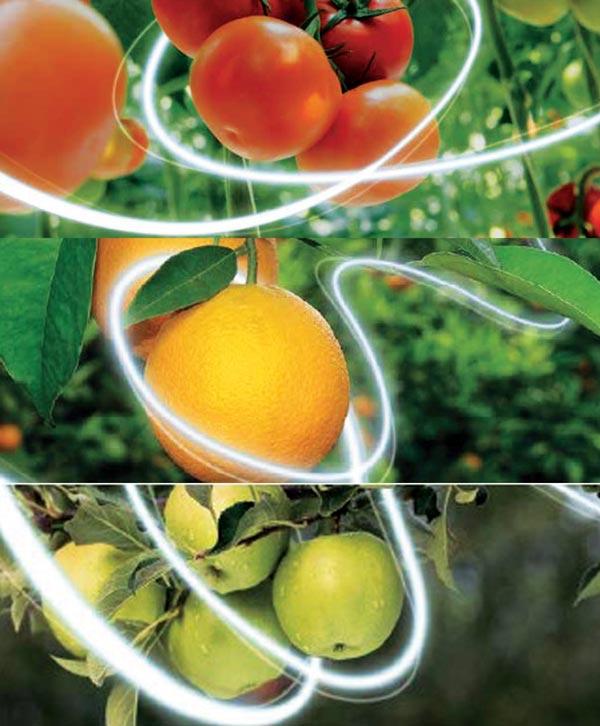 Inseticida Closer para beringela, pimento, tomate, curcubitáceas, ornamentais, cerejeira, pessegueiro, nectarina, macieira, pereira e citrinos