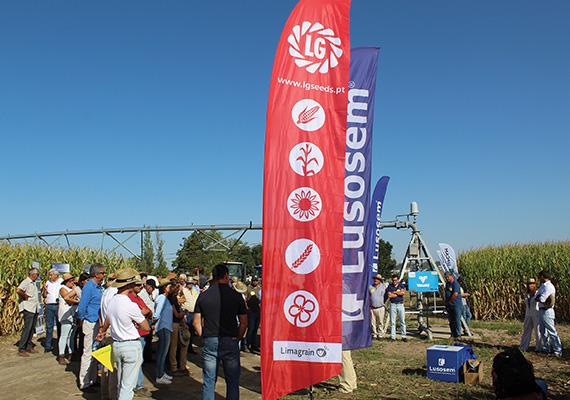 Apresentação de variedades de milhos LG no Dia de Campo InovMilho