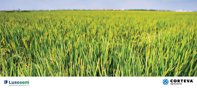 Loyant - Herbicida para a cultura do arroz