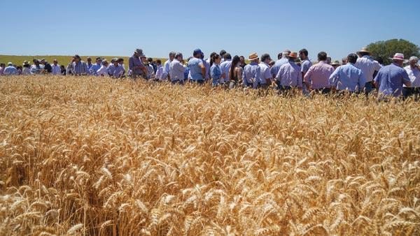 Plantação de Cereais