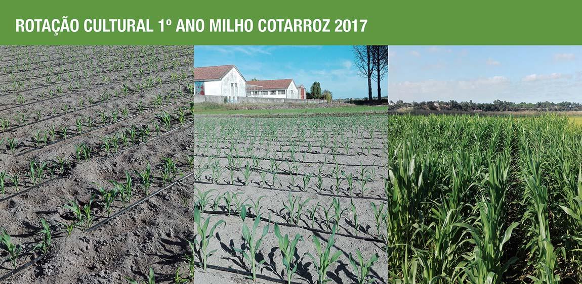 Rotação Cultural - 1º Ano Milho COTARROZ 2017