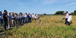 Dia de Campo mostra Inovação aplicada à cultura do Arroz