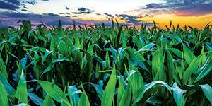 53 entidades criam Centro de Competências para tornar agricultura e florestas resilientes às alterações climáticas