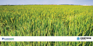 Loyant® novo herbicida arroz obtém autorização excecional para 2020