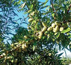 INDAR 5 EW obtém novos registros para Amendoeira