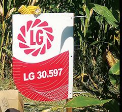 Milho LG30.597